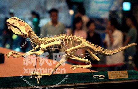 生于1.5亿年前,长约0.5米的鹦鹉嘴恐龙化石吸引了众多参观者的目光