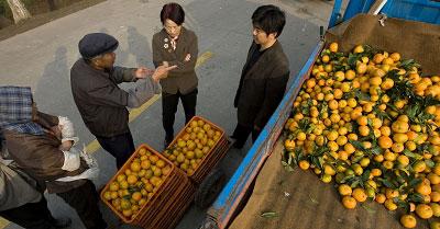 11月25日,长兴岛橘农和外地批发商在商量价格。